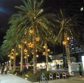 trees-miami-holiday
