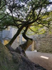 craigmillar trees